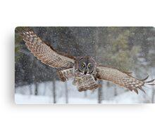 Duck! - Great Grey Owl Metal Print