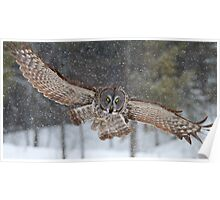 Duck! - Great Grey Owl Poster