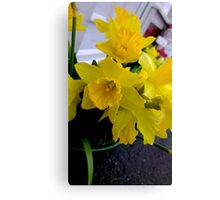 Daffodils in February Canvas Print