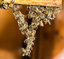 Bee Acrobats by Mark Bangert