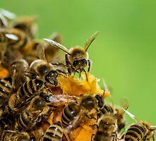 Honeycomb for Breakfast by Mark Bangert
