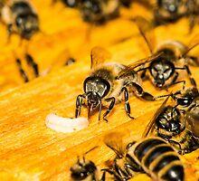 Queen Bee - or rather not by Mark Bangert