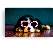 One cool dog. Canvas Print