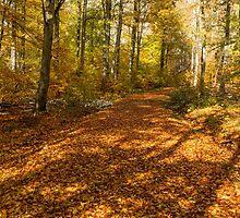 Autumn Forest by Mark Bangert