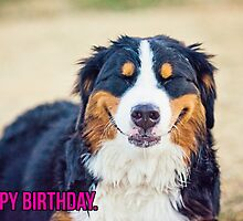 Happy Birthday from a Berner! by TheJill