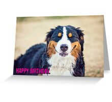 Happy Birthday from a Berner! Greeting Card