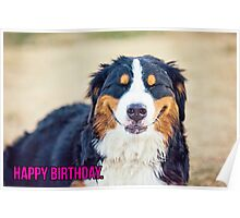 Happy Birthday from a Berner! Poster