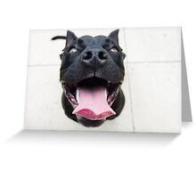 Pit Bulls are so ferocious! Greeting Card
