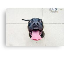 Pit bull smiles! Canvas Print