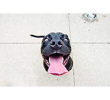 Pit bull smiles! Photographic Print