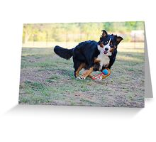 Get it, Berner! Greeting Card