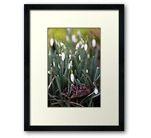 Old Giving Way to New Framed Print