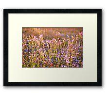 Wildflower Dusk Framed Print