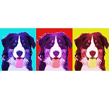 Berner - Warhol Style. Photographic Print