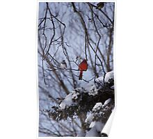 Cardinal in the Winter Poster