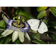 Small White Butterfly Photographic Print