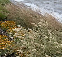 Grasses on the shore of Lake Burley-Griffin by indiafrank