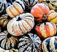 Squashes at a Farmer's Market by circa24