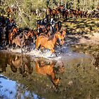 Horse reflections by Chris Brunton