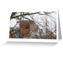Tree to Tree - Great Grey Owl Greeting Card