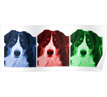 Bernese x 3 Poster