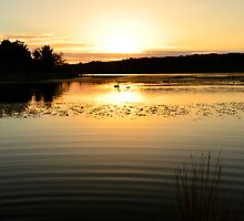 On Golden Pond by Norm Tilley