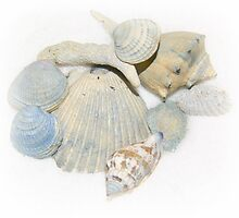 Sea shells  turned into a Tote bag by jeanlphotos