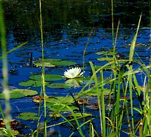 Wetland Wildflowers by Kathleen M. Daley