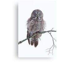 Soaked - Great Grey Owl Metal Print