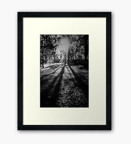 Jarrah Giants Framed Print