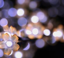 Tree Lights. by Jeanette Varcoe.