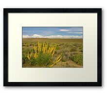 Princes Plume And Mount Tom - Spring Wildflowers Owens Valley Eastern Sierra California Framed Print