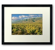 Princes Plume And White Mountains - Owens Valley California Framed Print
