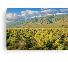 Princes Plume And White Mountains - Owens Valley California Canvas Print