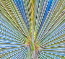 Palm Frond - Bismarckia Palm Madagascar by Ram Vasudev