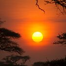 Serengeti Sunrise by Philip Alexander
