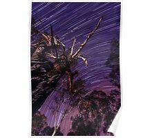 Dead Tree ~ Star Trail Poster