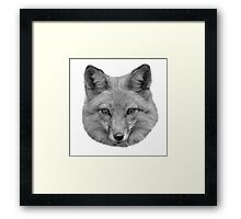 Black and White American red fox Framed Print