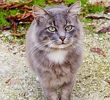 A friendly straycat by DebbyScott