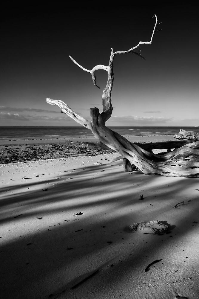 yoga on the beach by james smith
