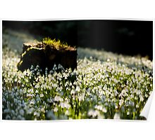 The Stump and the Snowdrops Poster