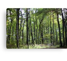 Robinhoods forest Canvas Print