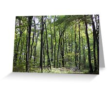 Robinhoods forest Greeting Card