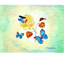 Morph Butterflies on Yellow Rose Photographic Print