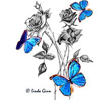 Morph Butterflies on Black and White Roses by Linda Ginn Art
