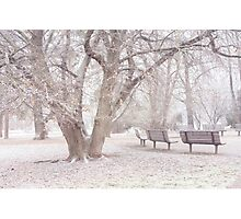 Light Walk in the Snowy Old Park Photographic Print