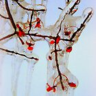 Euonymus on Ice by TrendleEllwood