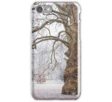 Platan Tree in Early Winter iPhone Case/Skin