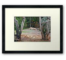 Rhinos at Rest Framed Print