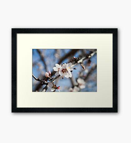 Blooming Trees! Framed Print